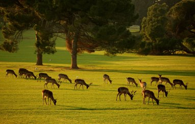 Brijuni nacionalni park